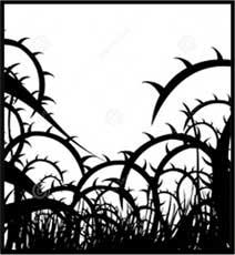 thorns-w.jpg